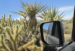 And here, a Cholla cactus threatens to poke the FJ as it slowly rolls by