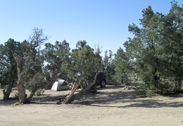 I wake up at a nice camp site in the Mid Hills area of Mojave National Preserve