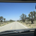 "It's always a pleasure to drive  through what is often called ""The densest Joshua tree forest in the world"""
