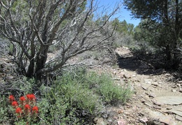 Indian paintbrush flowers provide a splash of color along the trail