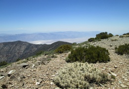 A few low-growing cacti and juniper can be found around the Wildrose Peak summit