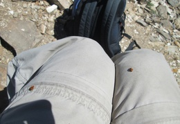 Ladybugs keep landing on me while I take a break on Wildrose Peak