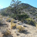 The trail passes scattered junipers and pinon pines