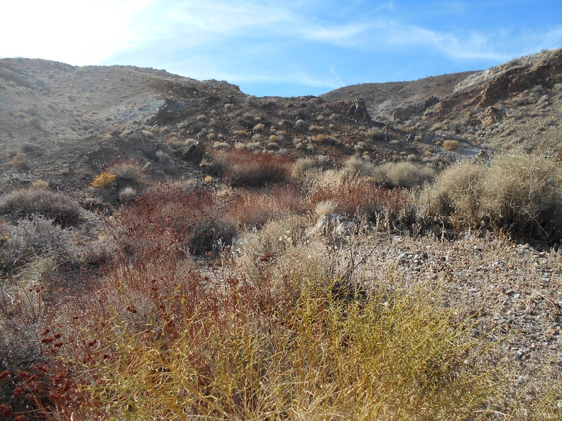 A few patches of red buckwheats grow in the head of the canyon