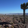 A few stoic Joshua tree soldiers stand on Quail Peak