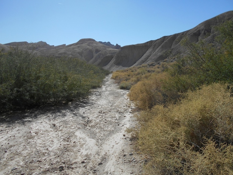 2292-amargosa-river-trail.jpg