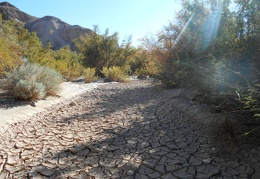 I backtrack and cross a dry segment of the Amargosa River
