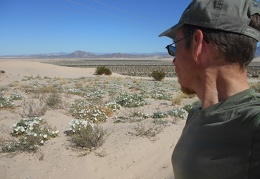 I pull over and take a stroll amongst the sweet-smelling Desert primroses