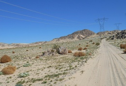 Dry, brown tumbleweeds sit next to green Desert primroses