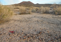 Here's another abandoned balloon, but this one is red...