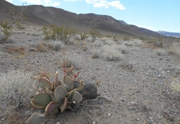 I start skirting the edge of the valley and pass a just-flowered cactus
