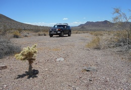 This road ends at a cholla cactus in Rhodes Wash, so I take a short break here