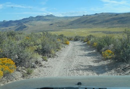 Back down into the valley of yellow rabbitbrush flowers we go