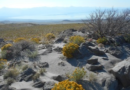 Exploring the Horse Peak area, I take in many views of Mono Lake