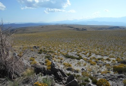 I take some long looks westward toward the Sierras across the Cowtrack Mountains plateau