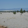 One day, this view of Mono Lake may be blocked by the regrowing pine forest