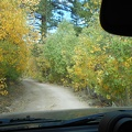 Now-yellow cottonwood trees line the road as I drive out of Obsidian Campground