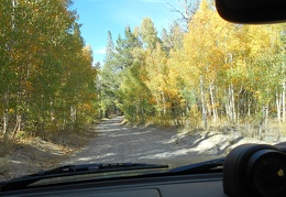 I get to drive through another bright patch of cottonwood trees
