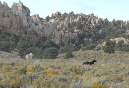 Aha, there's one of the wild horses that are known to inhabit Granite Mountains Wilderness!