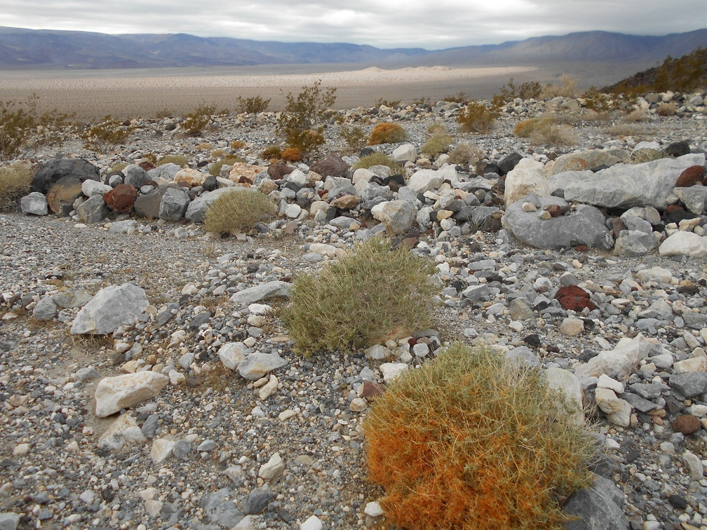 A clump of orange dodder sits between me and the Panamint Dunes