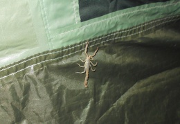 I set up my tent and find a scorpion inside that must be removed before I go to sleep