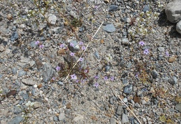 A few more little purple flowers at my feet almost go noticed