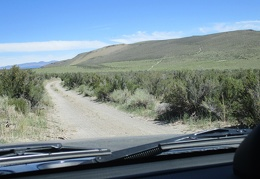 I'm beyond the wildflowers now, driving up a road toward Cowtrack Mountain