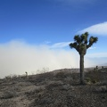 This old joshua tree has likely seen many dust storms like this in Panamint Valley below