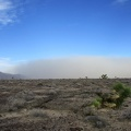 A Joshua tree lays on the ground, perhaps tired of watching these dust storms