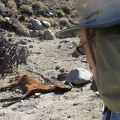 We encounter a dead horse as we head up the canyon