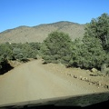 Saline Valley Road rises slowly, now I'm passing through a juniper forest