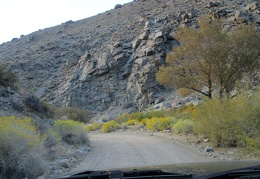 Lots of yellow rabbitbrush to pass on the way down into Saline Valley