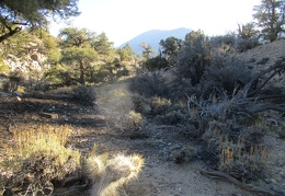 A few fuzzy cacti grow among the pines, junipers and sagebrush up here