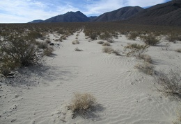 Sand ripples cross the rarely used road into Harliss-Brody Canyon