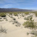 I walk across a sandy field of creosote bushes toward the Saline Range