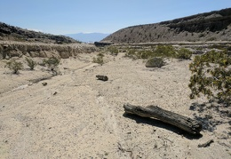 Here's another log washed down into Waucoba Wash from the Inyo Mountains