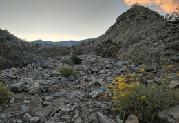I start my way up Lead Canyon past desert marigolds as the sun sets
