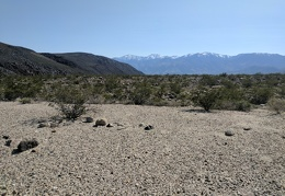 I reach a nice patch of desert pavement with a view of the snow-capped Inyos