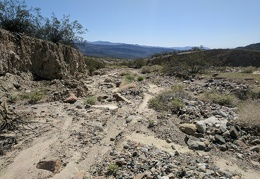 This is my third day in a row hiking different parts of Waucoba Wash