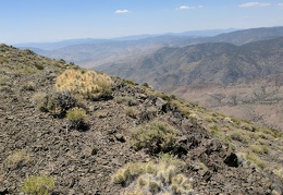 A few soft, fuzzy cacti grow up on the Moho Mountain plateau