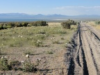 Mono Lake comes into view as I drive past prickly poppies