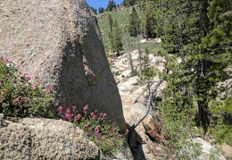 The penstemons grow closer to the edge of the rocks than I want to walk