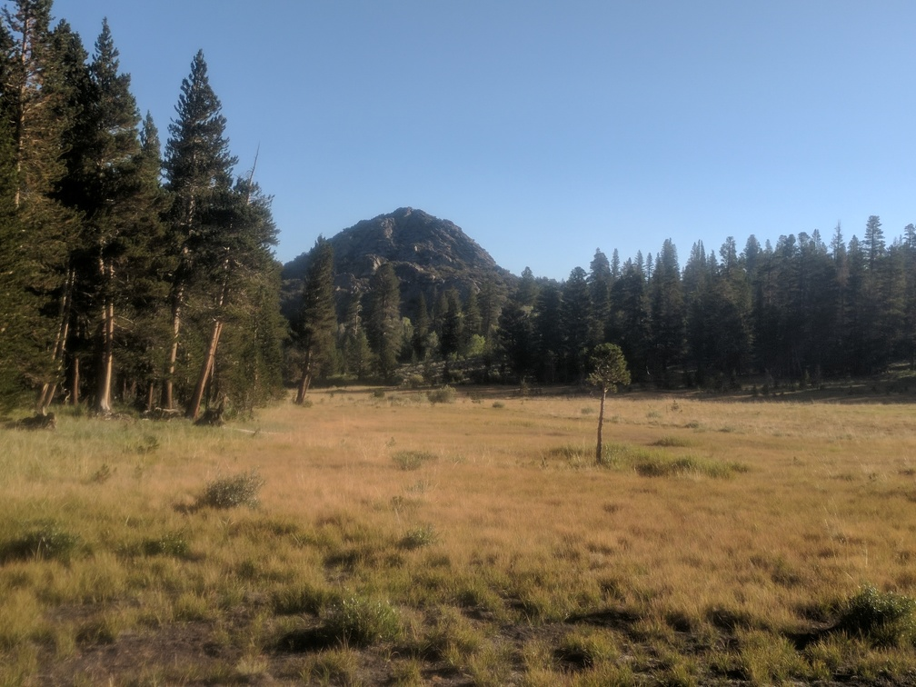 I guess this meadow behind my tent is the official Sawmill Meadow