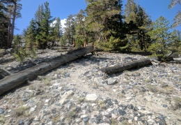 It's a footpath between logs and chunks of obsidian