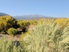 Sagebrush and rabbitbrush in front of Glass Mountain