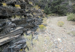 Rabbitbrush grows in benches in Bench Canyon