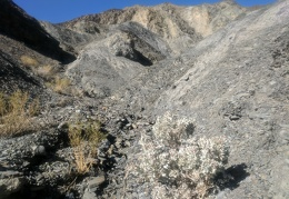A desert holly grows in the crumbled rock