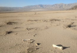 These bones didn't leave tracks on the playa