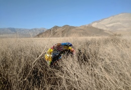 A stray mylar balloon: common debris in Death Valley