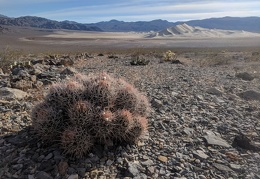 Which is bigger, the cottontop cactus or Eureka Dunes?